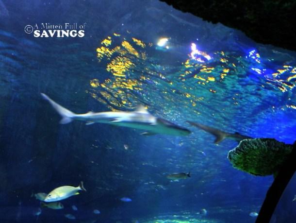 sharkssealifemichigan