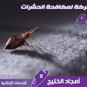 شركة مكافحة البق بالمدينة المنورة - ورش حشرة بق الفراش بمبيدات فعالة