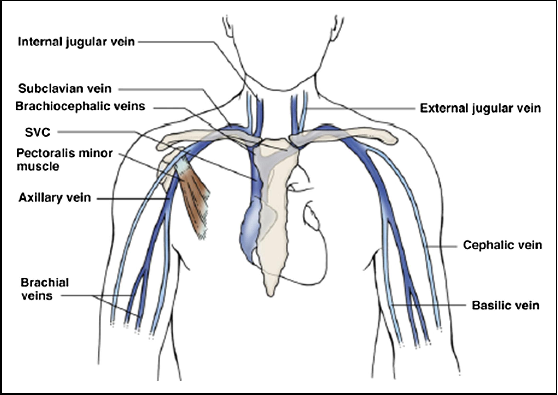 Ultrasound Vein Center Worksheet