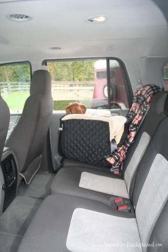 dachshund carseat