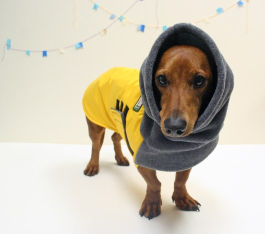 10 Winter Coats That Fit Dachshunds Ammo The Dachshund