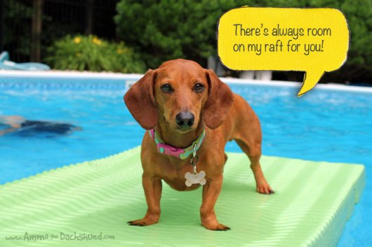 Ammo the Dachshund - There's Always Room on my Raft for you!