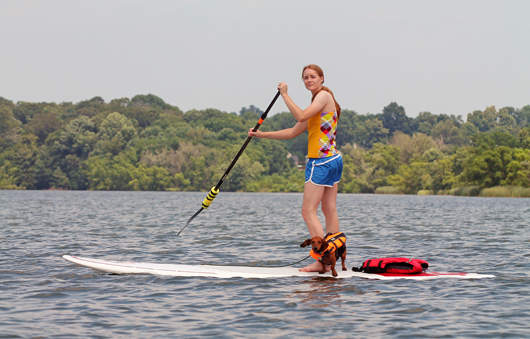 Stand Up Paddleboarding with your Dog - via Ammo the Dachshund