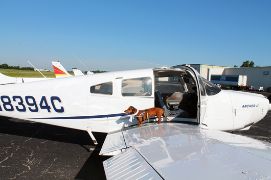 Ammo the Dachshund takes Flight - Small Dog takes to the Air in a Single Engine Piper Plane