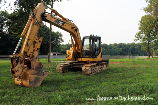 Ammo the Dachshund - Hole Digging Heaven - Backhoe on the Farm