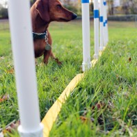 DIY Weave Poles with the Dog Agility Shop