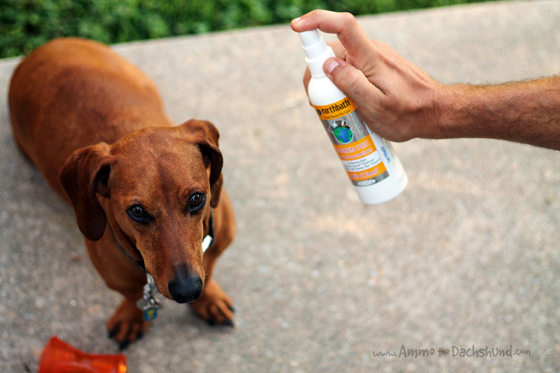 Prime Pet Supply Review & Giveaway // Ammo the Dachshund