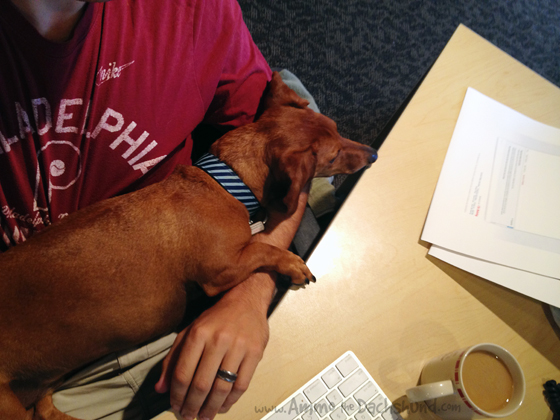 Adventures in Graphic Design // Ammo the Dachshund goes to Work