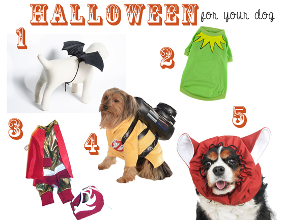 Halloween Costumes for Your Dog // Ammo the Dachshund
