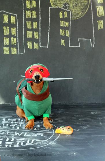 Cowabunga, Dude! Ammo the Dachshunds 2013 Halloween Costume - Raphael the Ninja Turtle
