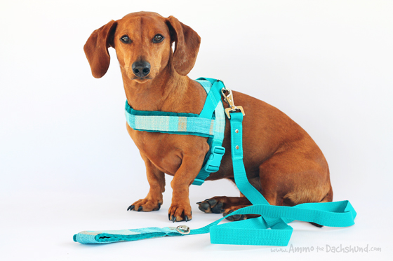Dog Harnesses Dachshunds Wiring Diagram Services