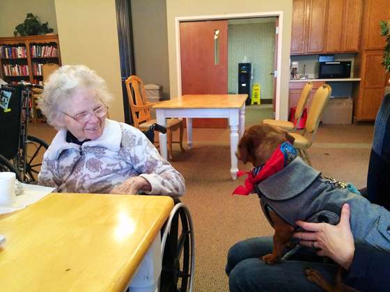Ammo the Dachshund Visits the Nursing Home