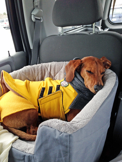 Travel Bed Thatu0027s Safe For Your Dog In The Car // Ammo The Dachshund