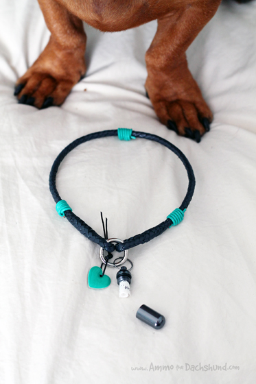 Blanketid Lounge Collar & Podz Review & Giveaway // Ammo the Dachshund