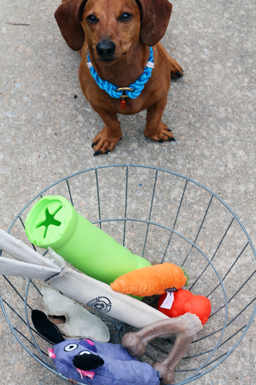 Toy Graveyard // Ammo the Dachshund