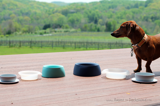 Sleepypod Yummy Bowl Review & Giveaway // Ammo the Dachshund