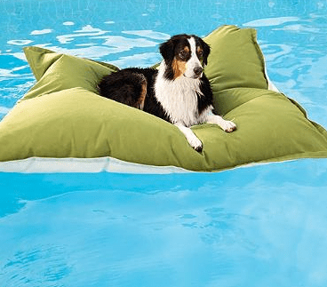 Friday Fetch Pool Floats For Dogs Ammo The Dachshund