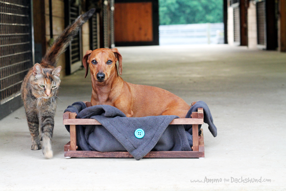 Blanket Dog Bed Review Giveaway Ammo The Dachshund