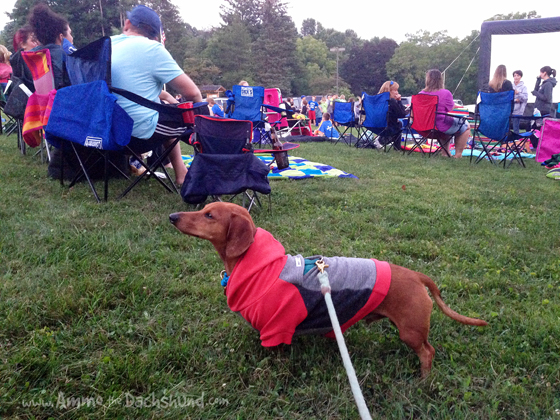Movie in the Park // Ammo the Dachshund