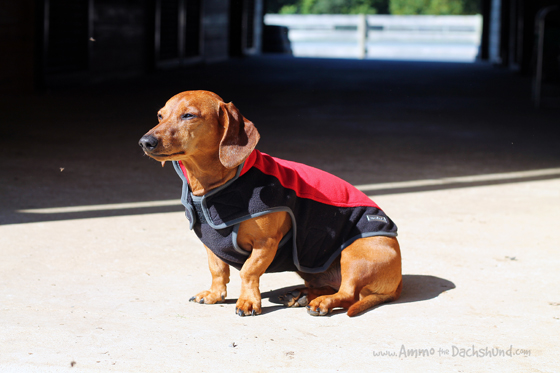 My Canine Kids Perfect Fit Dog Harness Amp Fleece Review