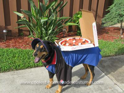 Weiner Dog Halloween Costumes.10 Homemade Costumes For Dogs Ammo The Dachshund