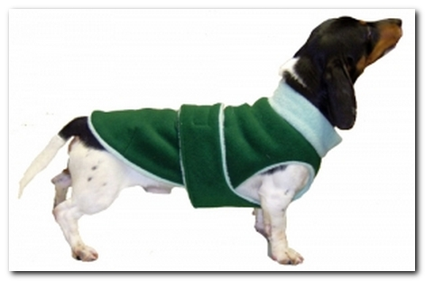 10 Fall Sweaters That Fit Dachshunds Ammo The Dachshund