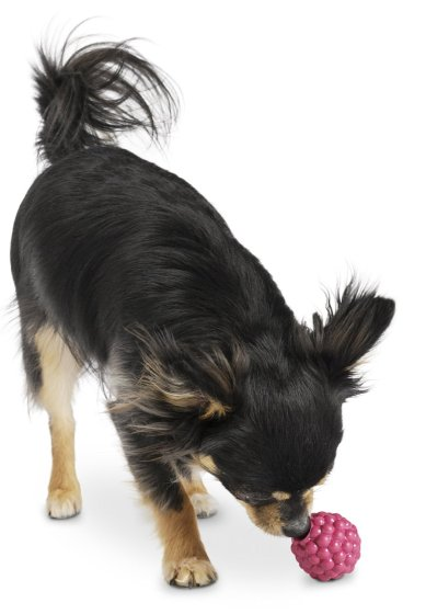 Planet Dog Orbee-Tuff Raspberry // Tough Toys for Dogs // Ammo the Dachshund