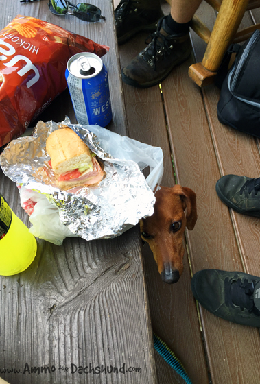 Pet Friendly Smoky Mountains // Ammo the Dachshund