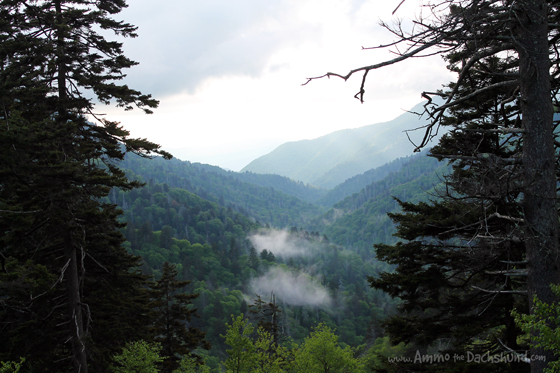 The Great Smoky Mountains National Park // Pet Friendly Travel // Ammo the Dachshund
