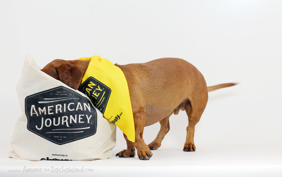 American Journey from Chewy.com Review & Giveaway via Ammo the Dachshund