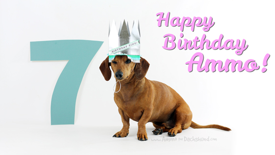 Birthday Week: Happy 7th Birthday to Ammo