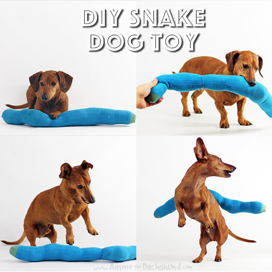 Birthday Week: DIY Snake Dog Toy