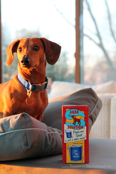 A Humane Bark Solution for Dogs + A Giveaway