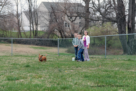 Easter Egg Hunts & Ham with Ammo the Dachshund