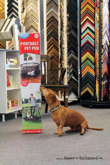 Carlson Pet Products Portable Pet Pen