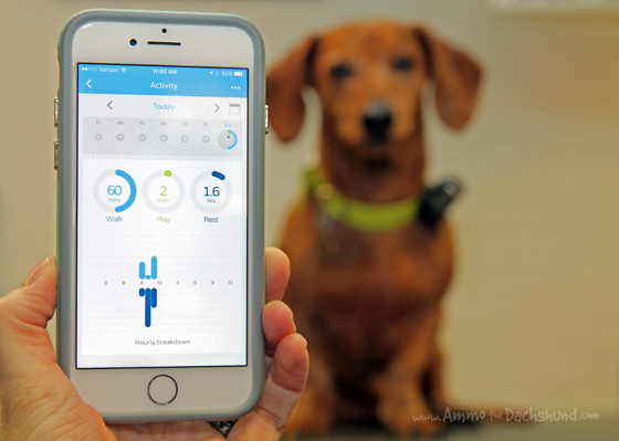 From Couch to Couch - How to tell if your dog is getting enough exercise with Pod Tracker