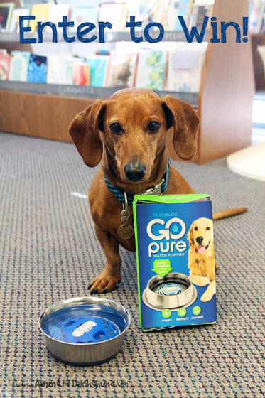 Safe Drinking Water for Pets with GoPure Pod + A Giveaway