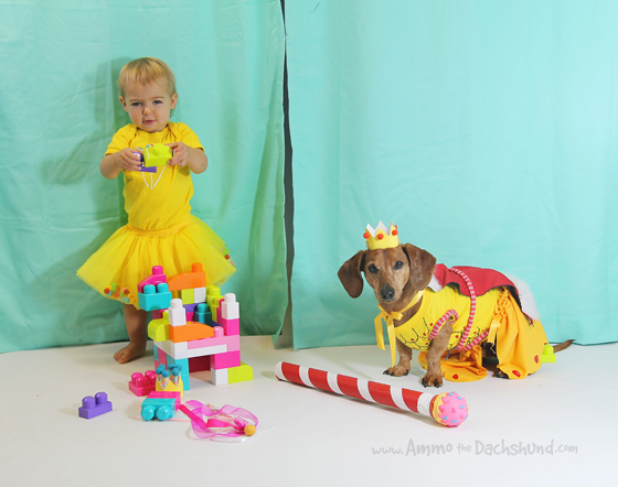 Adventures in Candyland / Ammo the Dachshund