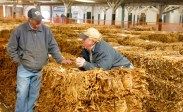 Farmers Terrill Simpson, left, and Tony Young talk among bales of tobacco at Farmers Tobacco Warehouse Tuesday morning, shortly before the auction starts. Simpson and Young were not participating in the auction; they had come to watch.
