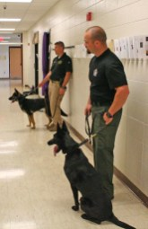 Kendra Peek/kendra.peek@amnews.com Boyle K9 Deputies Keith Addison and Casey McCoy with K9s Aja and NiKi, respectively, wait as another K9 and handler check a row of lockers.