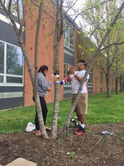 Photo submitted Danville High School students Gabby Campos and Christian Hill wrap trees at the school in preparation for Saturday's event.