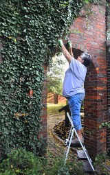 Geneva Hogue pulls overgrown ivy off of a brick archway at McDowell House.