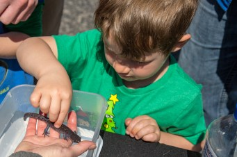 Marshall Noltemeyer, 4, touches a salamander at the Inter-County Energy booth.