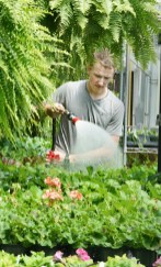 Alan Sinkhorn, a senior at BCHS waters geraniums on Thursday.