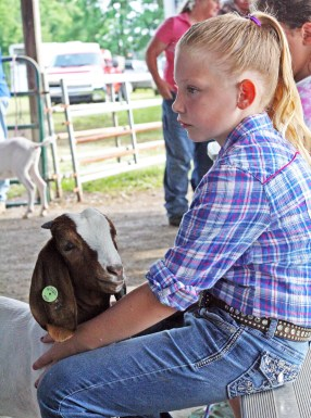 Kendra Peek/kendra.peek@amnews.com Cheyenne Phillips, 9, waits with her goat Buttercup at the Boyle County Fair goat show.