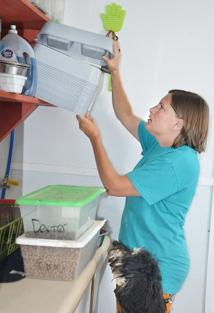 At lunchtime, Jenna Gordon pulls down a container of food as one of her daycare dogs watches.