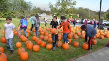 Robin Hart/robin.hart@amnews.com After helping the kindergarten students pick out and carry their pumpkins into their classroom, the older students had the opportunity to spread out and find their own pumpkins.