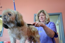 Photos by Robin Hart Adine Bouchard, co-owner of Uppity Puppy in Danvlle, brushes out Wookie before giving her a trim.