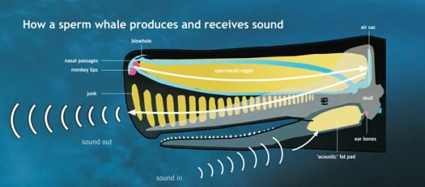 Whale Biology