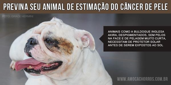 Dicas para evitar câncer de pele em cães